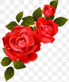 FLORAL FRAMES - Garden Roses Information Flower Clip Art PNG