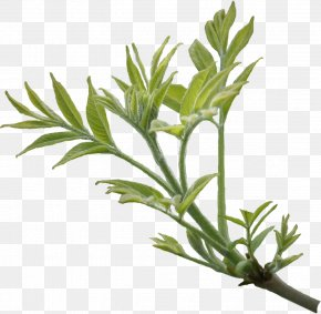Orange Leaves - Branch Leaf Tree Ash PNG