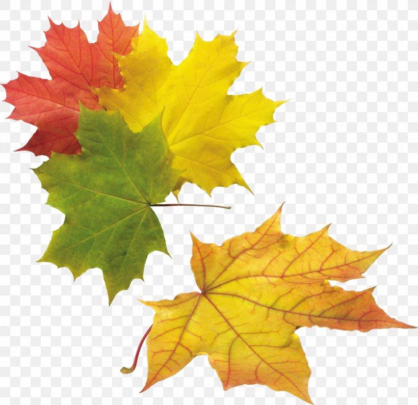 Autumn Polyvore God In Islam Tree, PNG, 2455x2383px, Autumn, Abu Turab, God In Islam, Grape Leaves, Islam Download Free
