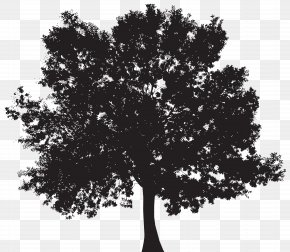 Tree Silhouette Clip Art - Silhouette Tree Clip Art PNG