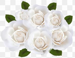 White Roses Clip Art Transparent Image - Garden Roses White Clip Art PNG