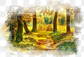Forest - Forest Tree Autumn Nature Landscape PNG