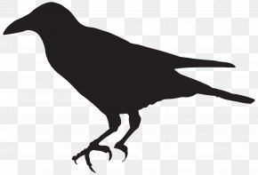Crow Silhouette Clip Art Image - Bird Silhouette Clip Art PNG