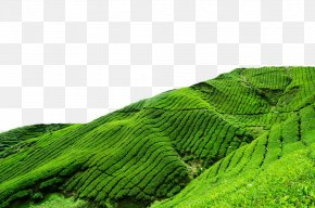 Green Tea Field - Berjaya Hills Resort Frasers Hill Heritage Hotel Tanah Rata Hotel Budget PNG
