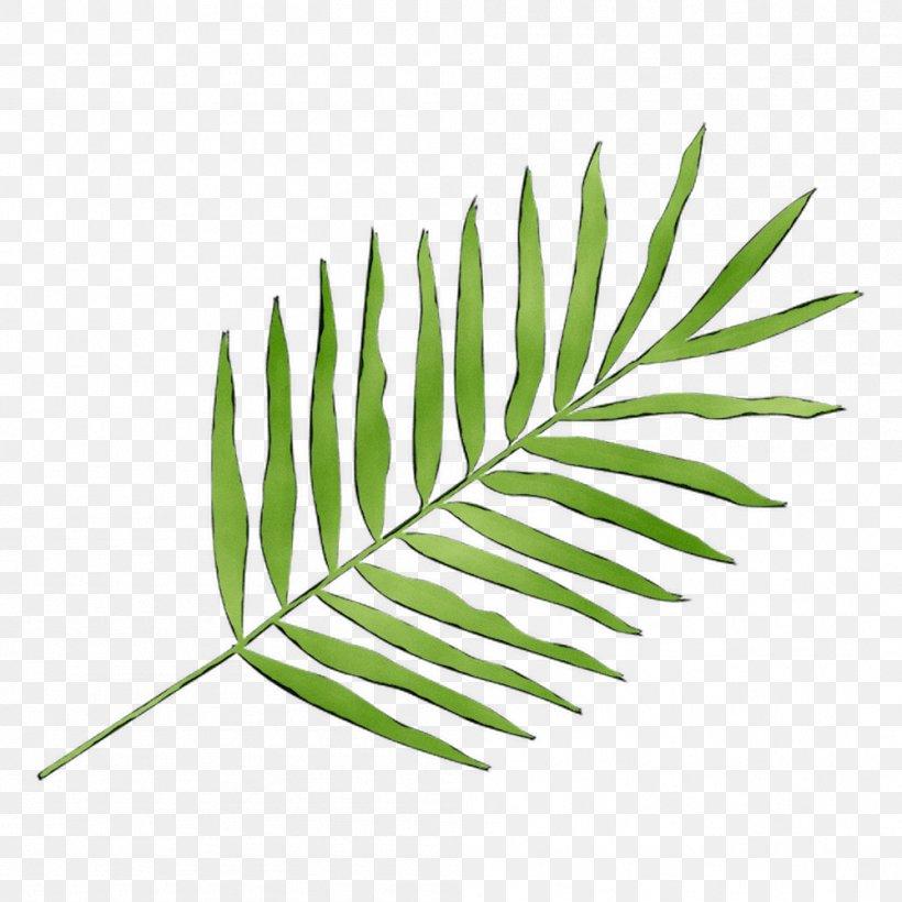 Leaf Plant Stem Line Grasses Plants, PNG, 999x999px, Leaf, Botany, Branch, Fern, Flower Download Free