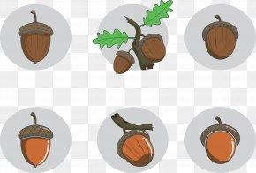 Acorn Leaves Seed Nuts - Seed Nut Acorn Fruit PNG