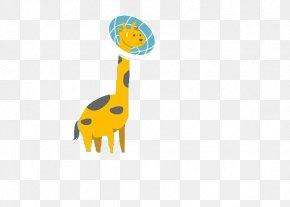Giraffe,Long Neck,lovely,animal - Giraffe Animal Download PNG