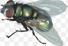 Fly 5 - Fly Insect Clip Art PNG