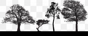 Trees Silhouette - Tree Euclidean Vector Clip Art PNG