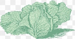 Painted Cabbage - Red Cabbage Broccoli Cauliflower Savoy Cabbage PNG