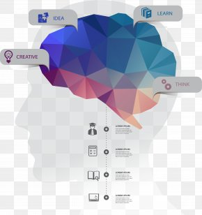 Creative Brain Function Information Vector Material - Infographic Brain Human Head PNG