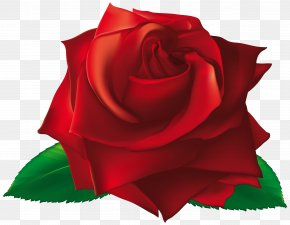 Red Single Rose Clipart Image - Rose Flower Royalty-free Clip Art PNG