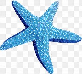 Starfish - Marine Animals Starfish Clip Art PNG