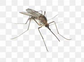 Mosquito - Dallas County, Texas Aedes Albopictus Mosquito-borne Disease Mosquito Control PNG
