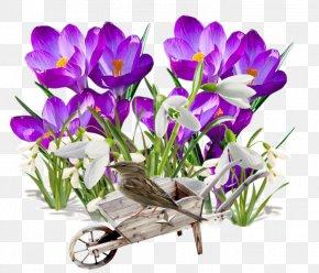 Crocus - Spring Flower Transplanting Garden PNG