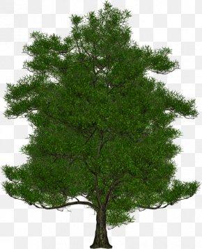 Tree - San Diego Metropolitan Transit System Tree Shrub Expert PNG