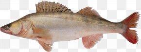 Fish - Fish PNG