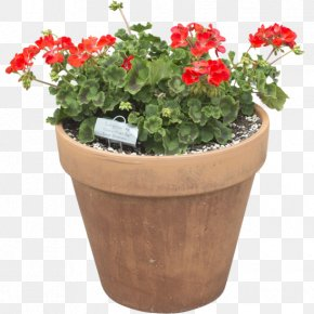 Flower Pot - Cut Flowers Flowerpot Plant Herb PNG