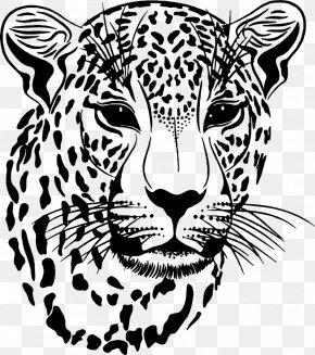 TIGER VECTOR - Clouded Leopard Jaguar PNG