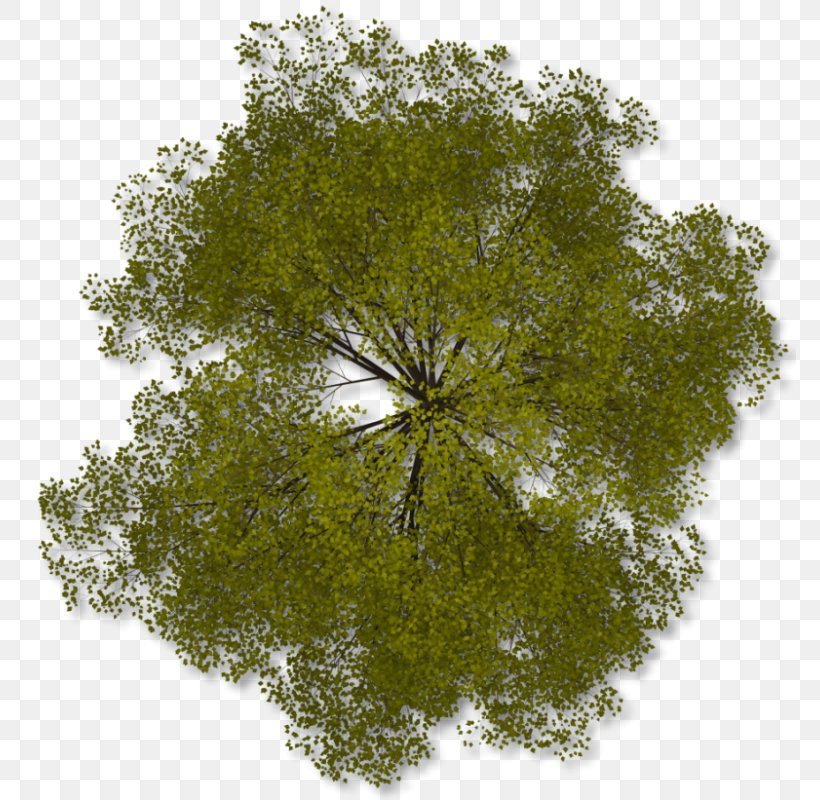 Tree Clip Art, PNG, 772x800px, Tree, Branch, Grass, Image File Formats, Leaf Download Free
