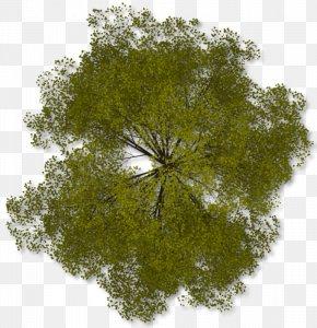 Tree Top Clipart - Tree Clip Art PNG