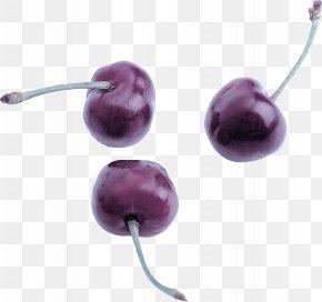 Jewelry Making Gemstone - Violet Purple Amethyst Jewellery Earrings PNG