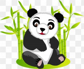 Panda - Giant Panda Bear Red Panda Clip Art PNG