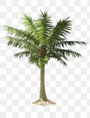 Palm Tree - Arecaceae Clip Art PNG