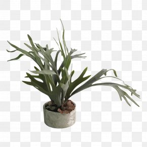 Red Clay Pot - Flowerpot Houseplant Staghorn Ferns PNG