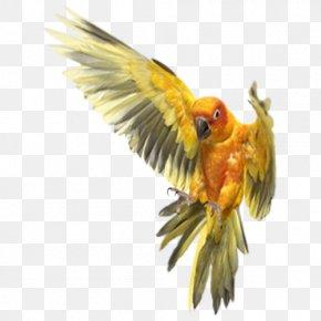 Parrot - Bird Cockatiel Dog Cockatoo Rope PNG