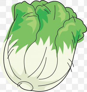 Head Of Cabbage - Leaf Vegetable Napa Cabbage Cartoon PNG