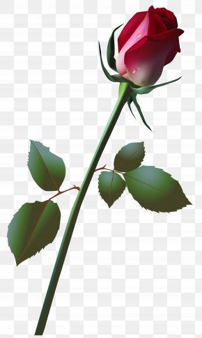 Beautiful Rose Bud Clip Art Image - Rose Bud Clip Art PNG