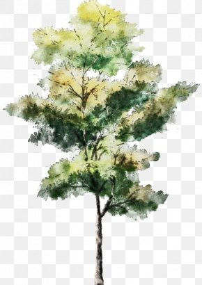 Trees - Tree Watercolor Painting Drawing Architecture Sketch PNG