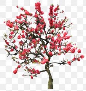 Cherry Blossom - Diamant Koninkrijk Koninkrijk Flowers & Trees Garden Flowers Android PNG