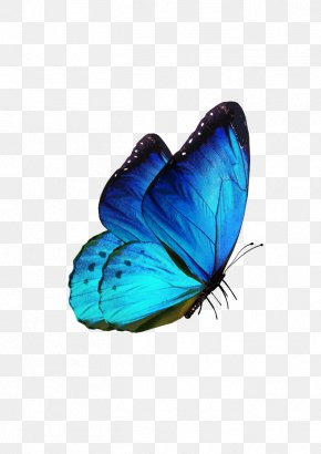 Butterfly - Butterfly Samsung Galaxy S8 Karner Blue PNG