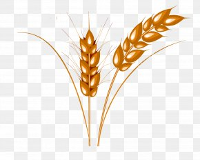 Wheat - Wheat Caryopsis Cattle PNG