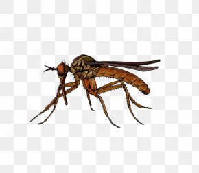 Brown Insect Mosquito - Fly Insect Marsh Mosquitoes Hematophagy PNG