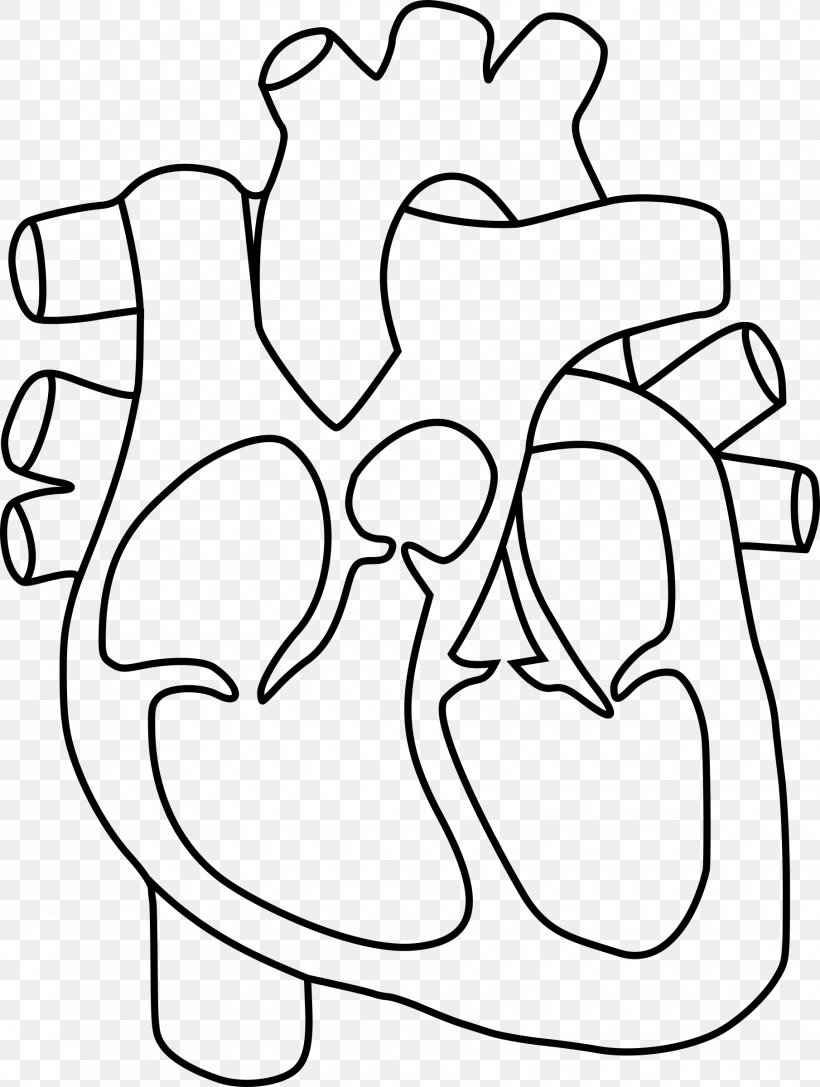 Heart Anatomy Coloring Book Drawing Clip Art, PNG ...