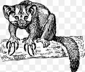 Mink Clipart - Lemur Aye-aye Clip Art PNG