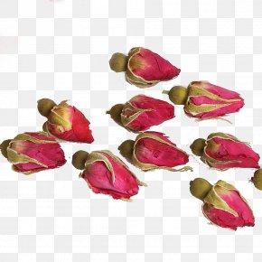 Rose Tea - Flowering Tea Beach Rose Pingyin County Rosa Chinensis PNG