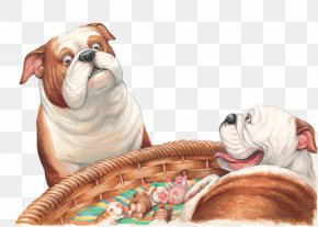 Puppy - Toy Bulldog Puppy Dog Breed Companion Dog PNG