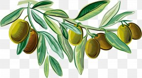 Green Delicious Olives - Mediterranean Cuisine Italian Cuisine Olive Oil Illustration PNG