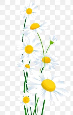 Transparent White Daisies Clipart - Common Daisy Clip Art PNG