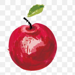 Apple - Watercolor Painting Vector Graphics Image Apple Download PNG