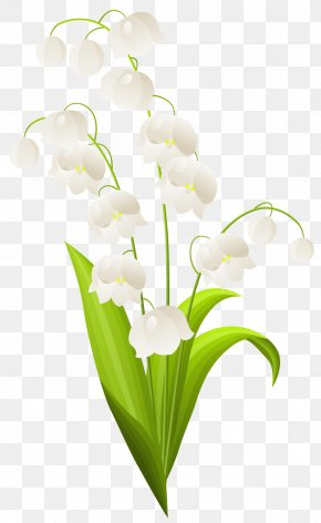 Lily Of The Valley - Lilium Candidum Lily Of The Valley Stock Photography Clip Art PNG