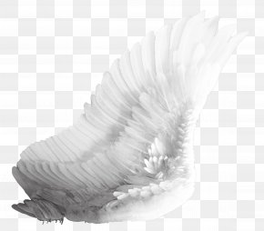 Wings - Bird Wing PNG
