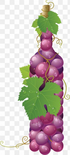 Red Grape Image - Wine Common Grape Vine Art Painting PNG