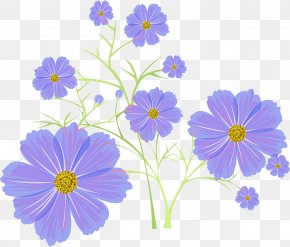 Cosmos Flower - Photography Flower Archive File PNG