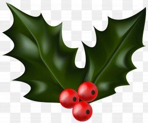 Mistletoe - Common Holly Christmas Decoration Clip Art PNG
