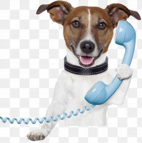 Dog - Dog Pet Sitting Telephone Stock Photography Mobile Phones PNG